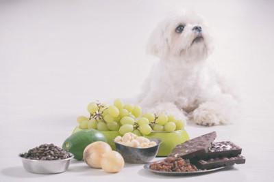 犬にNGな食べ物とマルチーズ