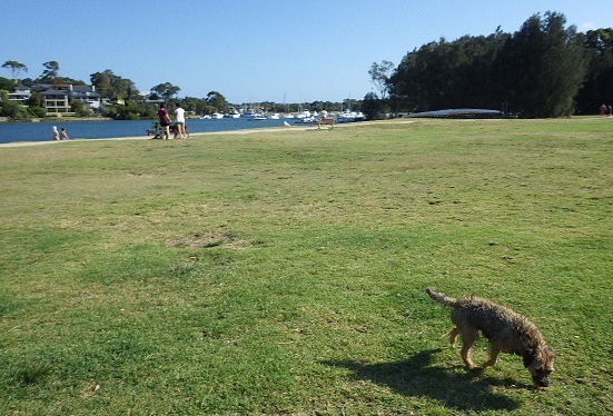 公園を散歩している犬