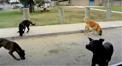 他の野良犬たち