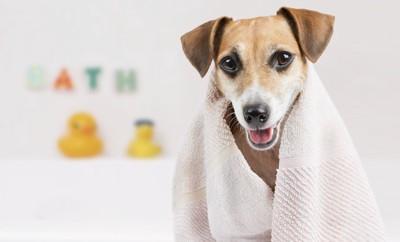タオルを首からかけている犬