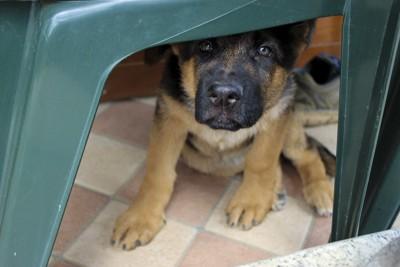 隠れて怯える犬