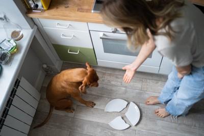 お皿を割ってしまった犬を叱る女性