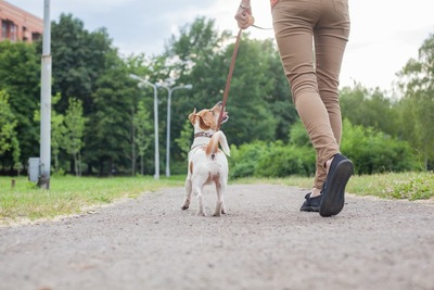ヒールウォークをする犬と女性