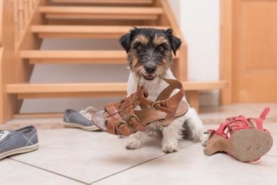 靴を噛んでいる犬