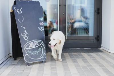カフェの入り口に白い犬