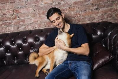 ソファーで男性に甘える柴犬