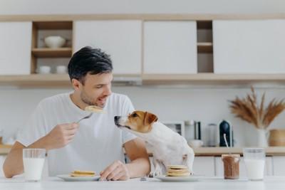 食事中の飼い主さんを見つめる犬