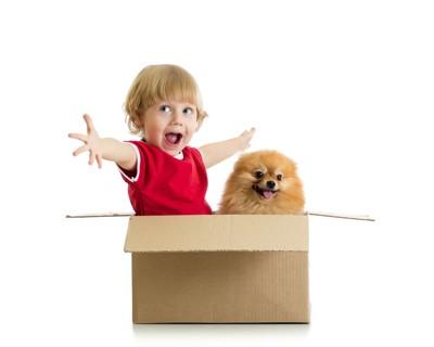 段ボールで遊ぶ犬と子供