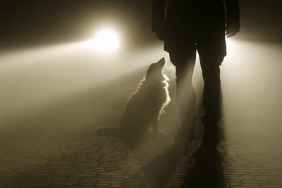 男性と犬の影