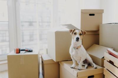 部屋に置かれたたくさんの箱と座る犬