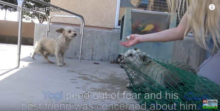 網でつかまった犬とそれを見る犬
