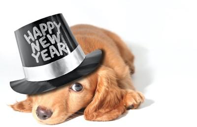 happynewyearのロゴの帽子を被る犬