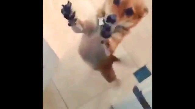 手を伸ばす犬