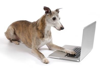 #ラップトップに触るシニア犬#︎