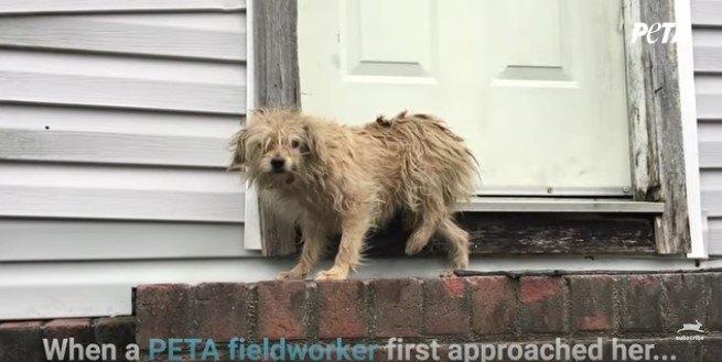 ドアの前に立ち止まる犬