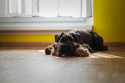 日向で眠る犬