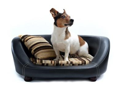 犬用ベッドでオスワリしている犬