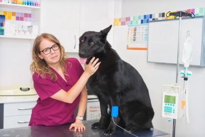 診察されている犬