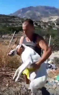犬を抱いて運ぶ