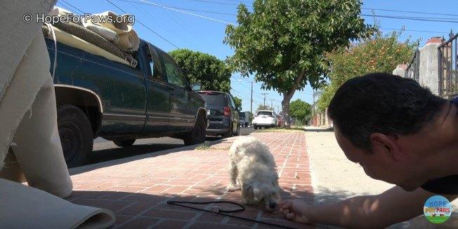 手から直接食べ物を受け取る犬