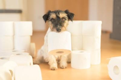 トイレットペーパーをくわえる犬