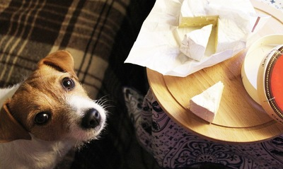 チーズを見上げる犬