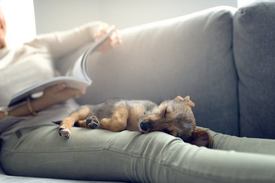 ソファーでくつろぐ飼い主の足の上で眠る犬
