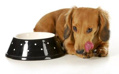 餌を食べた犬