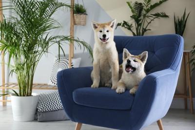 椅子の上の2匹の犬