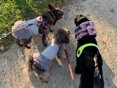 エマさんとお友達3人でお散歩