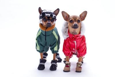 防寒着と靴を履いた2匹の犬
