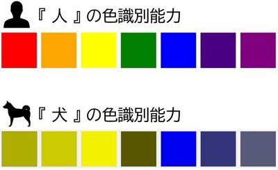 人と犬の色識別能力の違い