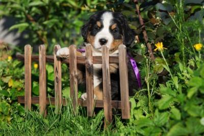 柵に前足を乗せる犬