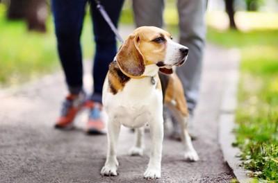 遊歩道に佇む犬