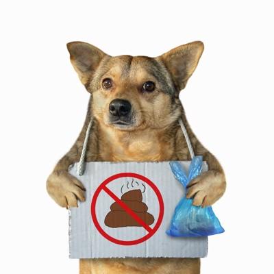 うんちマークの看板とマナー袋を持った犬