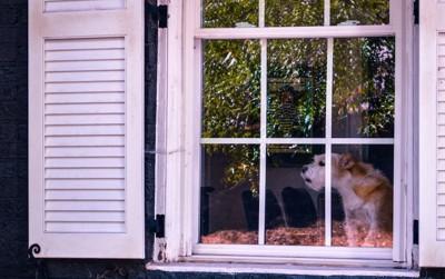 窓から外に向かって吠える犬