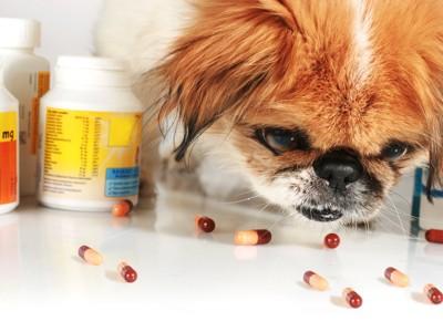 サプリメントの匂いを嗅ぐ犬