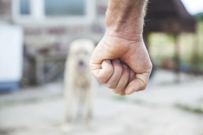 握りこぶしと犬