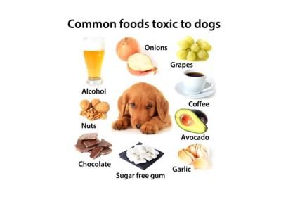 犬が食べてはいけないリスト
