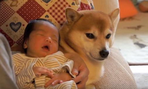 赤ちゃんと柴犬の2ショット