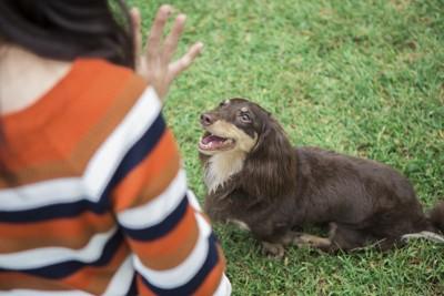しつけをする犬