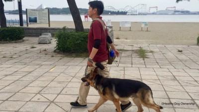人と散歩を楽しむ犬