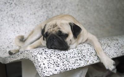 ベンチでバテている犬