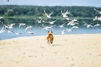 浜辺で鳥を追いかける犬