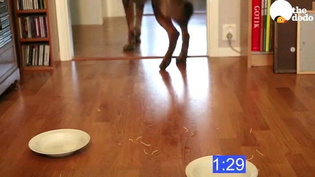 茶色の犬完食