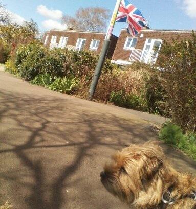 イギリス国旗と犬