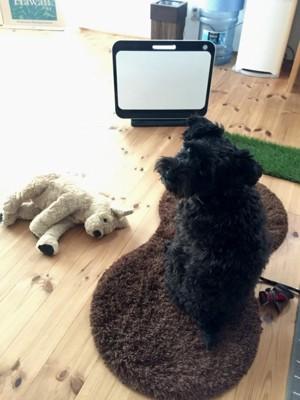 おもちゃの犬と座っている犬