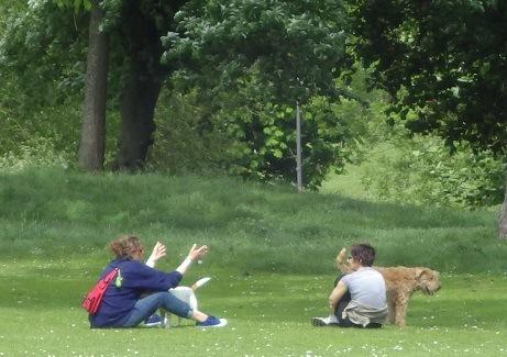 芝生でくつろぐ犬と飼い主