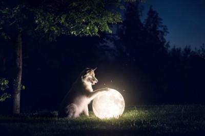 暗闇の中で光る月と白い犬