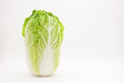 縦に立っている1本の白菜